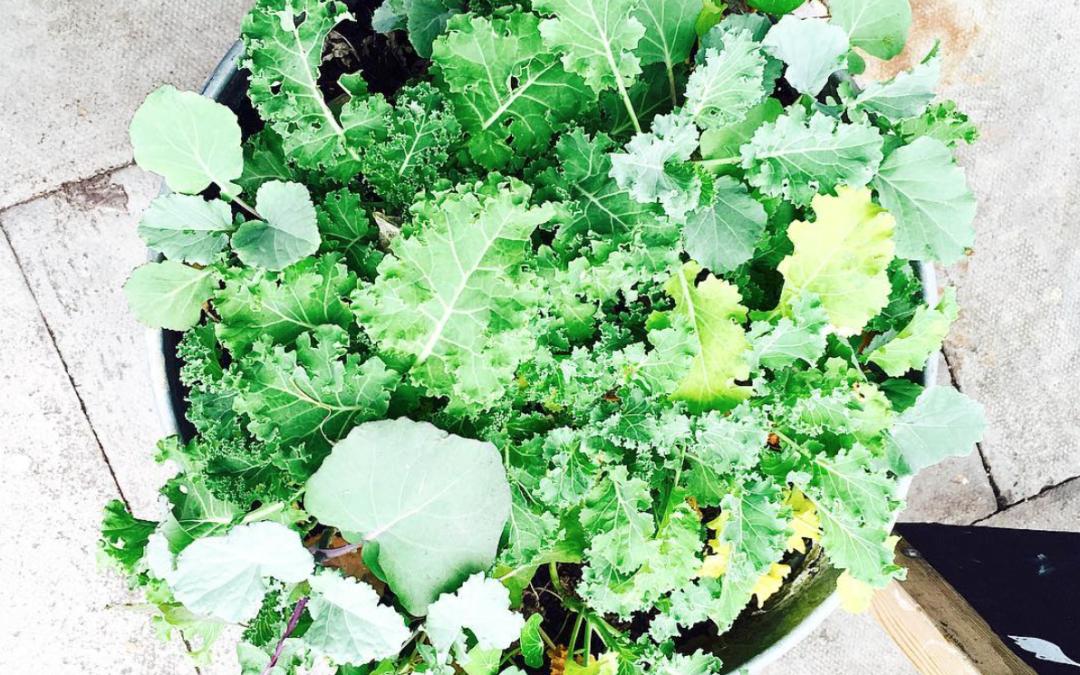 4 façons de cuisiner le chou kale